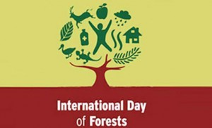 forest day-energybangla